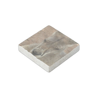 Canguro Imán De Piedra