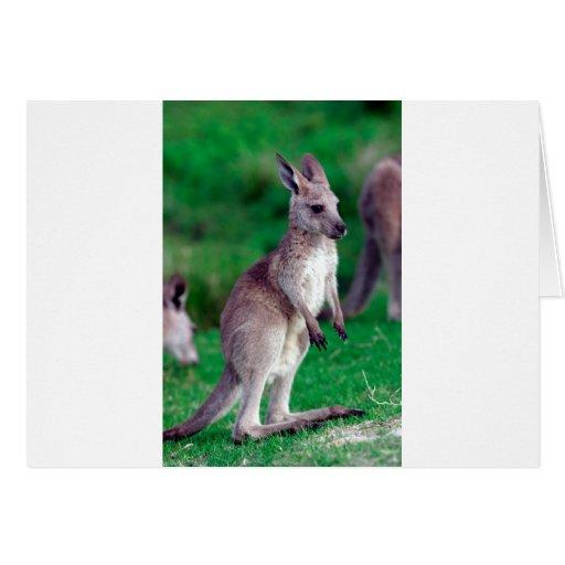 Canguro lindo del bebé del joey tarjeta de felicitación