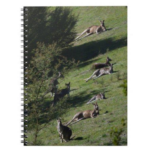 canguros cuadernos