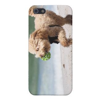Caniche - albaricoque - juego del caniche iPhone 5 carcasa