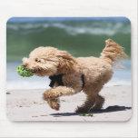 Caniche - albaricoque - juego del caniche tapetes de raton