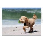 Caniche - albaricoque - juego del caniche felicitaciones
