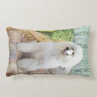Caniche blanco almohadas