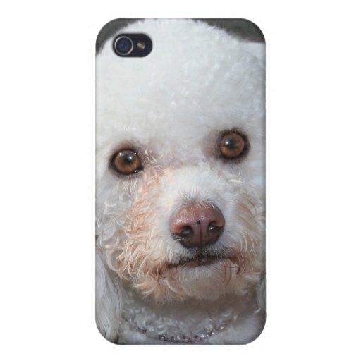Caniche blanco iPhone 4/4S fundas
