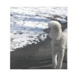 Caniche blanco por la nieve blocs