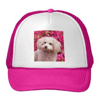 Caniche bonito gorra