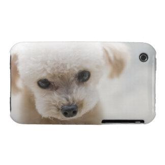 caniche de juguete iPhone 3 Case-Mate cobertura
