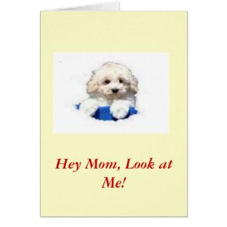 Caniche de juguete tarjeta de felicitación