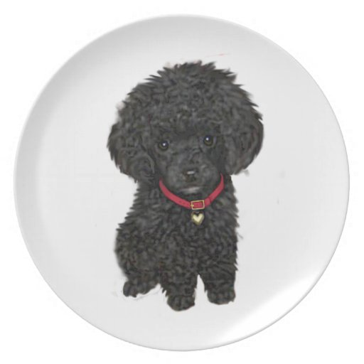 Caniche de la miniatura o de juguete - negro 1 platos