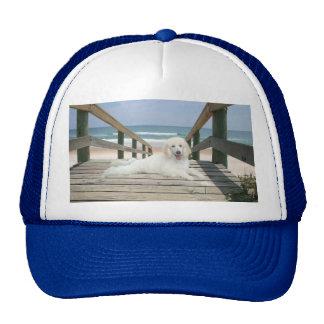 Caniche en el gorra del paseo marítimo