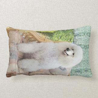 Caniche estándar blanco almohadas