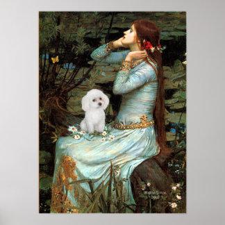 Caniche juguete blanco - Ofelia asentada Poster