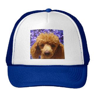 Caniche lindo gorras