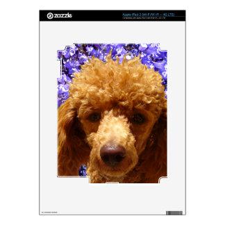 Caniche lindo iPad 3 pegatinas skins