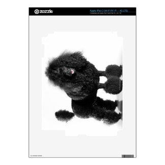 Caniche negro arreglado iPad 3 skins