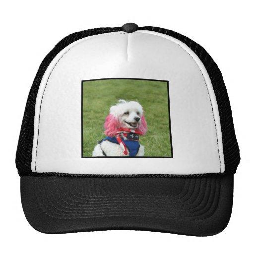 Caniche patriótico gorra