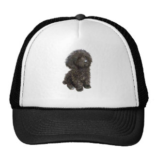 Caniche - perrito negro del juguete gorras de camionero