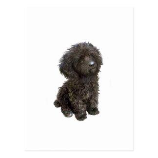 Caniche - perrito negro del juguete tarjetas postales