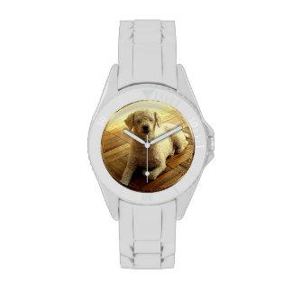 Caniche Relojes