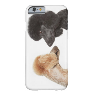 Caniches que se examinan funda barely there iPhone 6