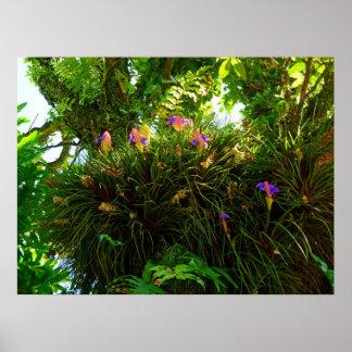 Canilla rosada Bromeliads Póster