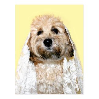 Canine bride or bridesmaid postcard