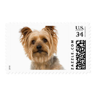 Canine Love Yorkshire Terrier Puppy Dog Postage