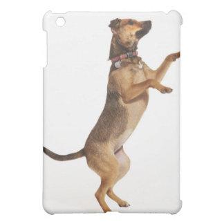 Canis familiaris 2 cover for the iPad mini