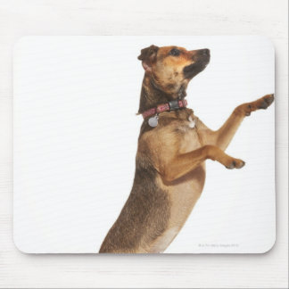 Canis familiaris 2 mouse pad