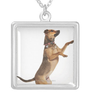 Canis familiaris 2 silver plated necklace
