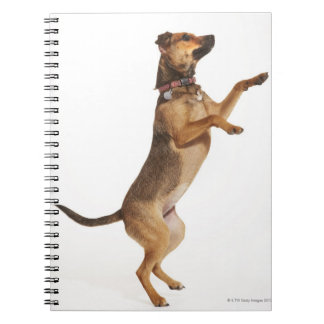 Canis familiaris 2 spiral notebook