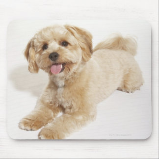 Canis familiaris mouse pad