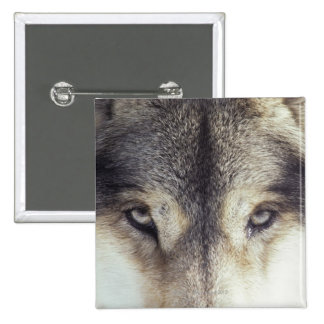 Canis Lupus Button