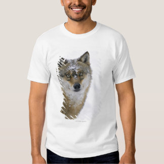 Canis lupus, Looking at Camera, Germany, Europa T Shirt