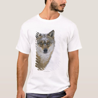 Canis lupus, Looking at Camera, Germany, Europa T-Shirt