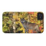 Canis lupus.order del lobo gris: carnivorafamily iPhone 4 Case-Mate cárcasas
