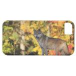 Canis lupus.order del lobo gris: carnivorafamily iPhone 5 carcasas