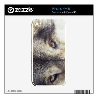 Canis Lupus Skins For iPhone 4