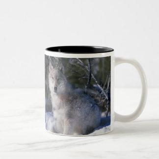 Canis_lupus_wolf, Canis_lupus_wolf Coffee Mug