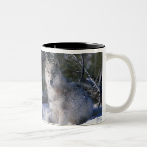 Canis_lupus_wolf, Canis_lupus_wolf Two-Tone Coffee Mug Zazzle