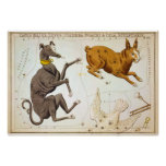 Canis Major, Lepus, Columba Noachi & Cela Sculptor Print