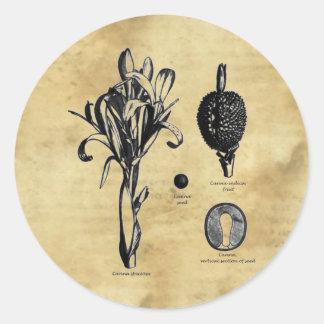 Canna Botanica Classic Round Sticker