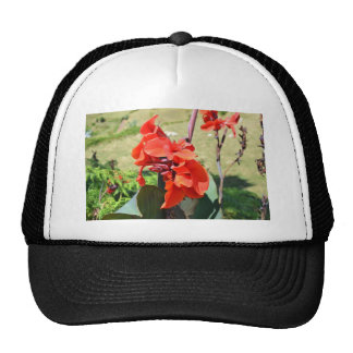 Canna Lilly Mesh Hats
