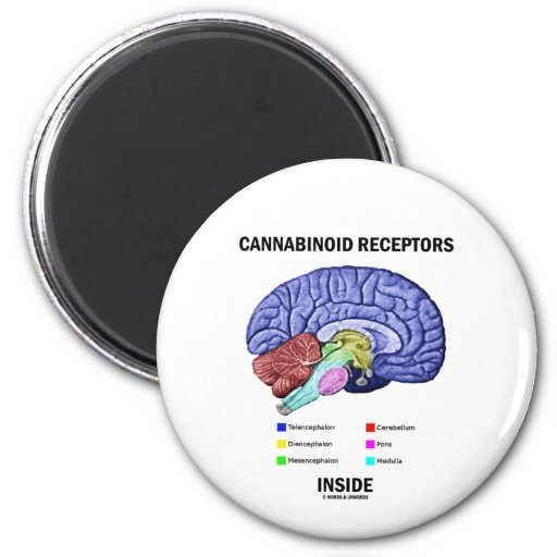 Cannabinoid Receptors Inside (Brain Anatomy) 2 Inch Round Magnet
