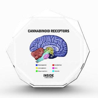 Cannabinoid Receptors Inside (Brain Anatomy) Acrylic Award