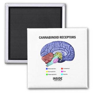 Cannabinoid Receptors Inside Brain Anatomy Magnet