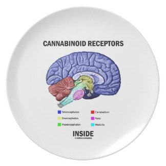 Cannabinoid Receptors Inside (Brain Anatomy) Dinner Plates