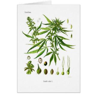 Cannabis sativa card