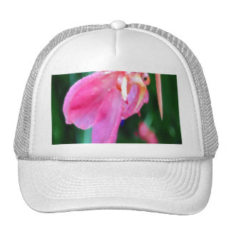 Cannas-PhotoMagic Mesh Hats
