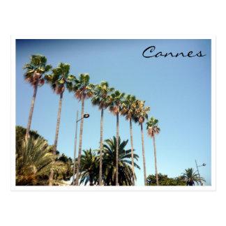 cannes palms postcard